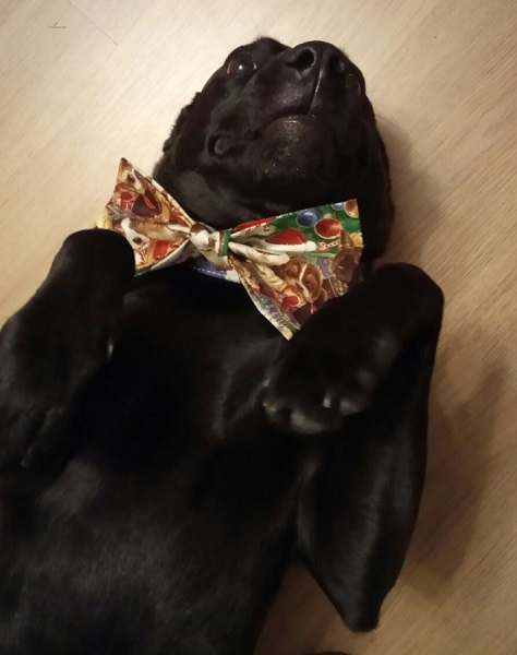 Large Fluffy Dog Fabric Christmas Collar