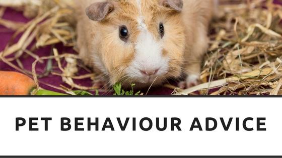 Pet Behaviour Advice