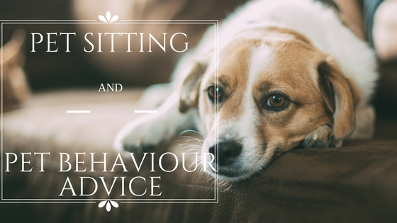 Pet Sitting Pet Behaviour Advice