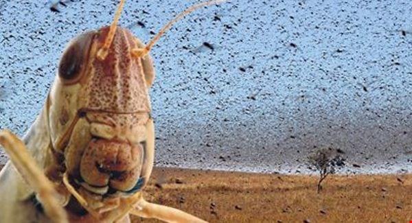12 Invasive Species