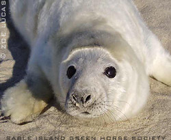 International Seal Day