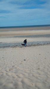 Pet Services Dog Walking