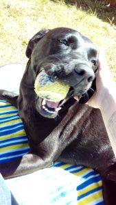 Pet Services Dog Sitting
